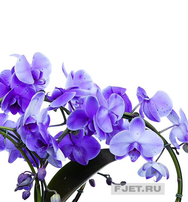 Доставка поздравлений и цветов 191