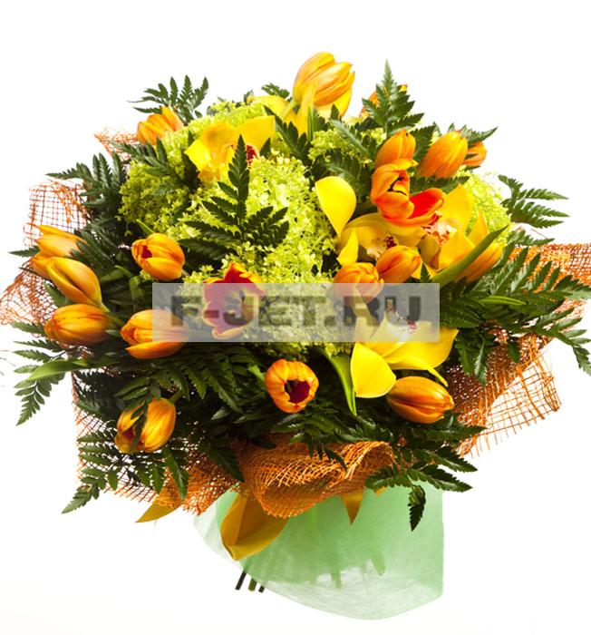 Комнатные цветы фото и название по